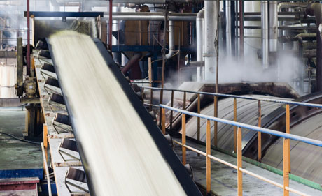 During sugar cane harvest, our partner processes and crushes over 7000 tons of raw sugar cane each day.