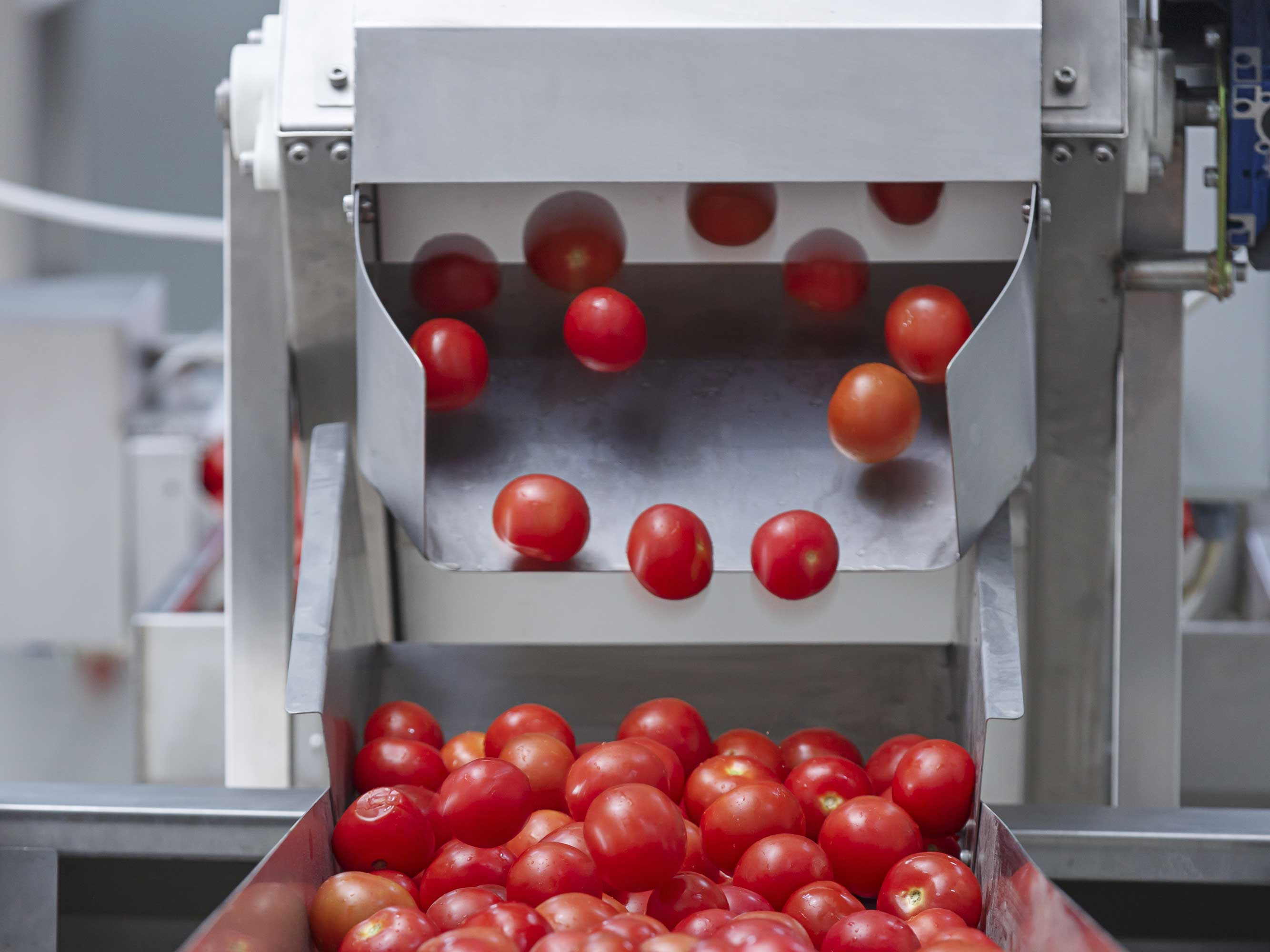 Food processing - tomato calibration machine