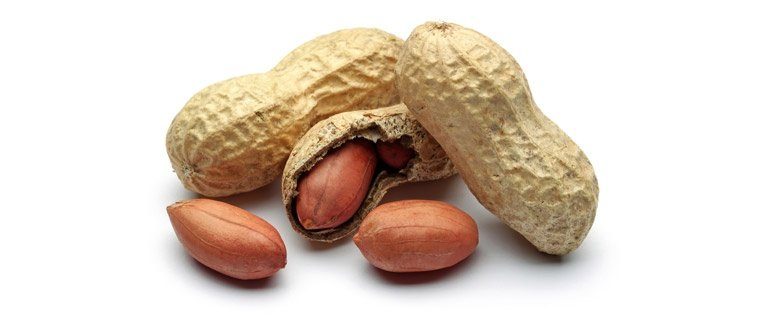 Food Bearings for Peanut Processing: Solving a Lubrication Challenge